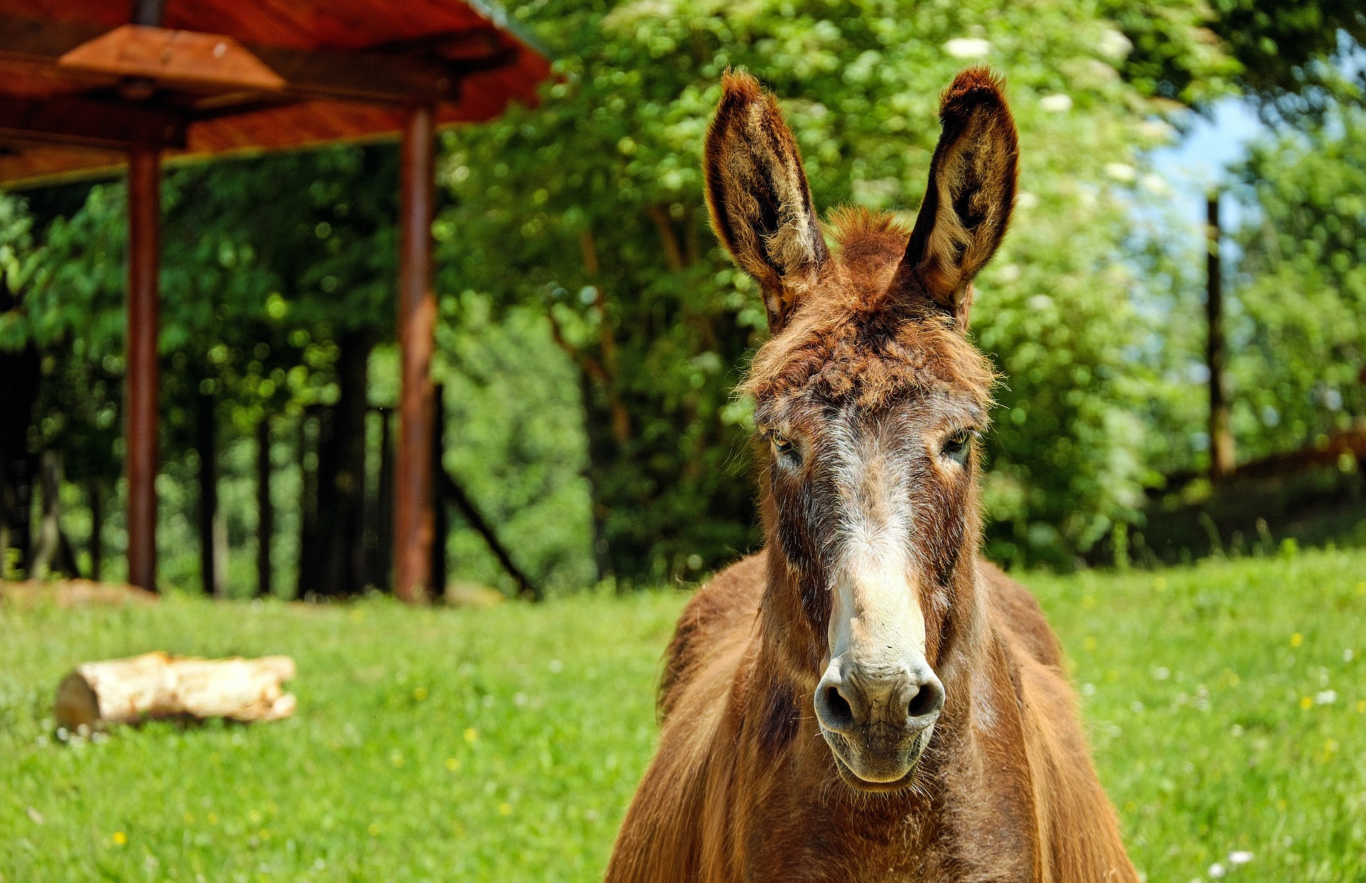 donkey, game